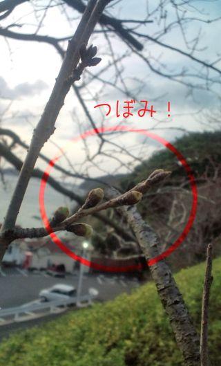Sakura20100312のコピー